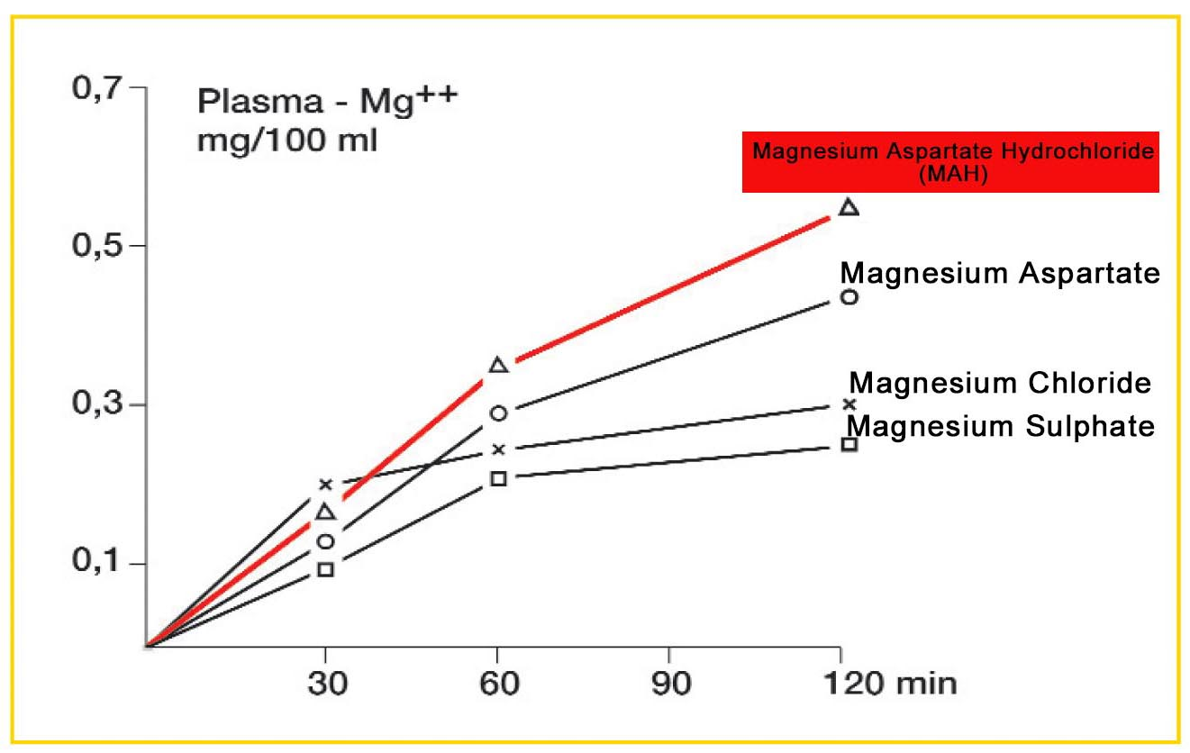 Comparison of Magnesium Supplements for Horses