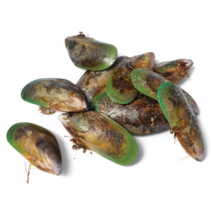 Green Lipped Mussel for Horses