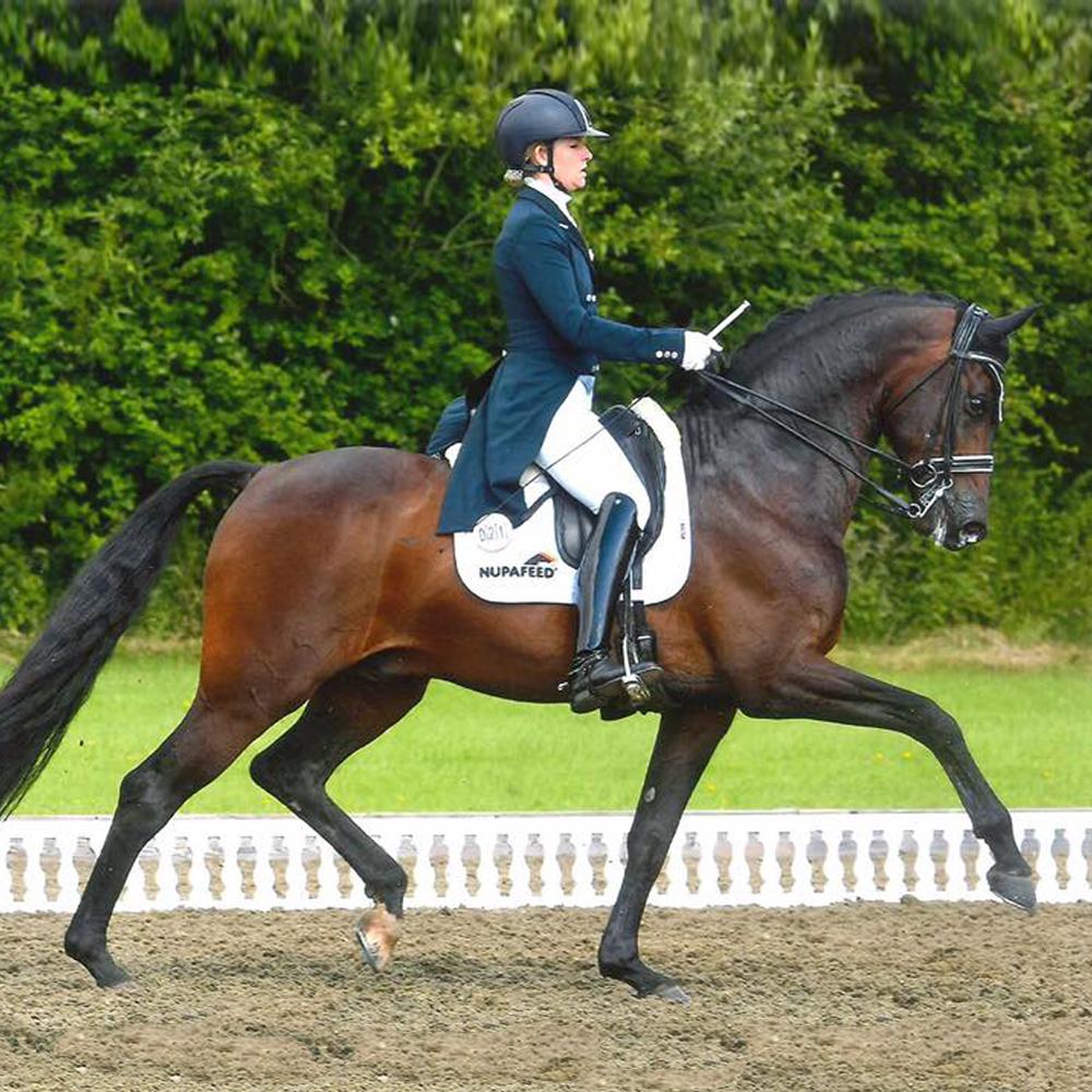 sara gallop bandreo dressage mah horse calmer