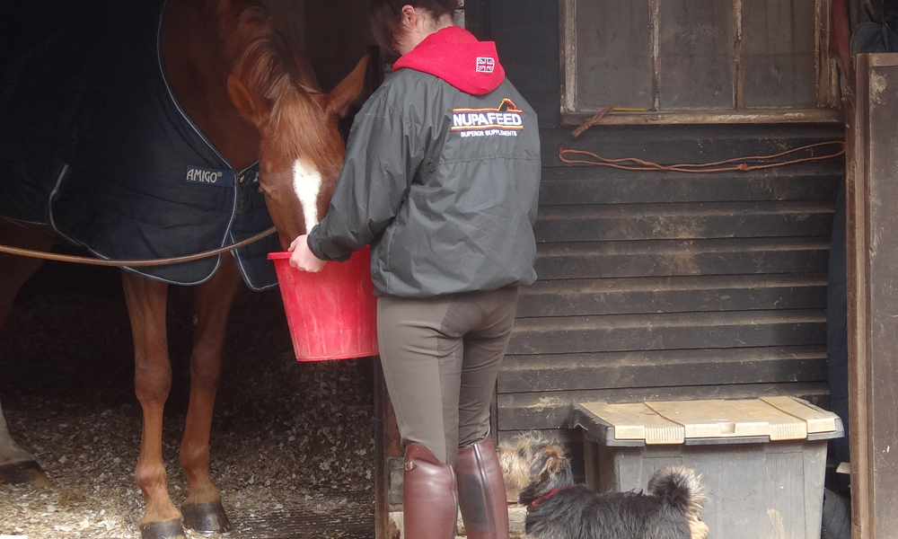 feeding nupafeed mah magnesium for horses