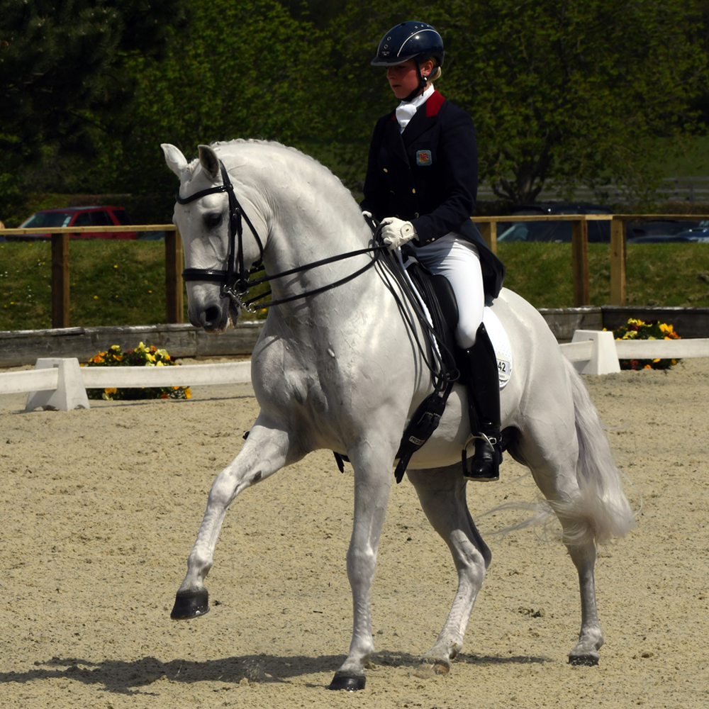 becky edwards dressage staying power