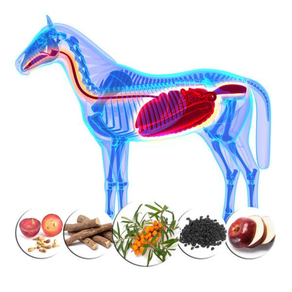 apple-pectin-grape-seed-and-seabuckthorn-oil-for-horses