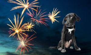 Calming_dogs-for-fireworks-on-bonfire-night