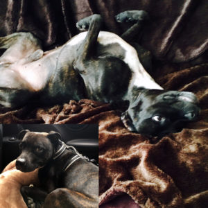 Nupafeed Dog_Stress-Less_Calming for Dogs_Emma Cowan