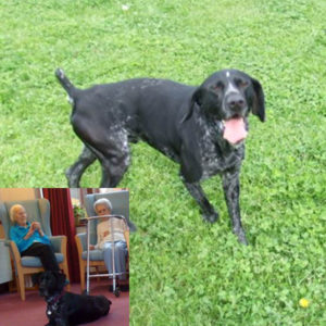 Nupafeed Dog_Stress-Less_Calming for Dogs_Sarah Hadley