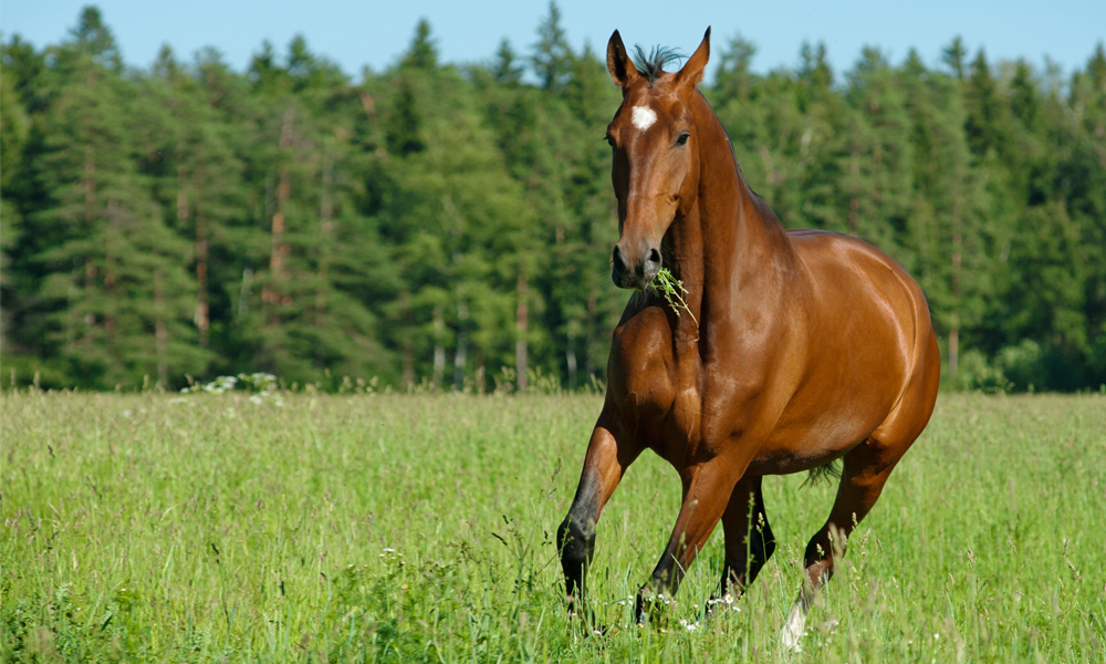 Best-Horse-Calmer-for-Spring-Grass