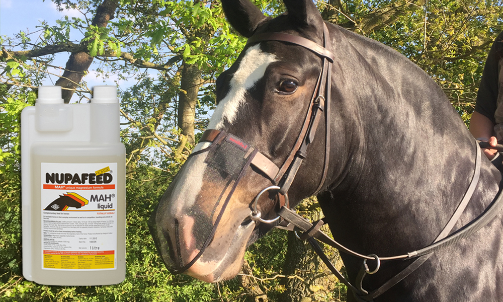 acial Nerve Support for Horses