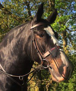 Headshaking-Syndrome-Horse-Nose-Net