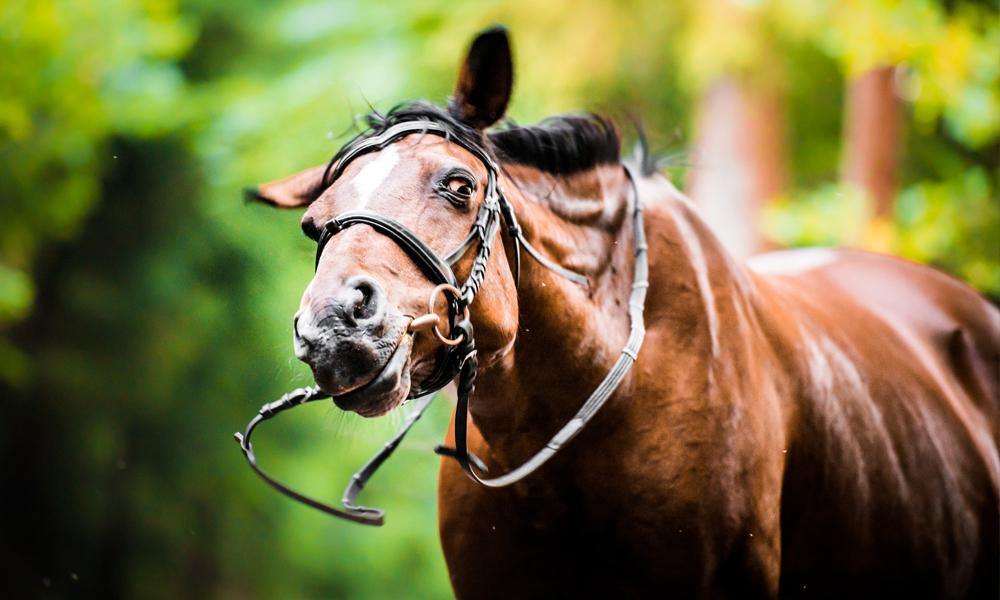Headshaking-in-Horses